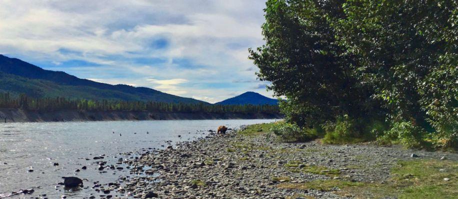 De Russian River Alaska de roadtrip bestemming