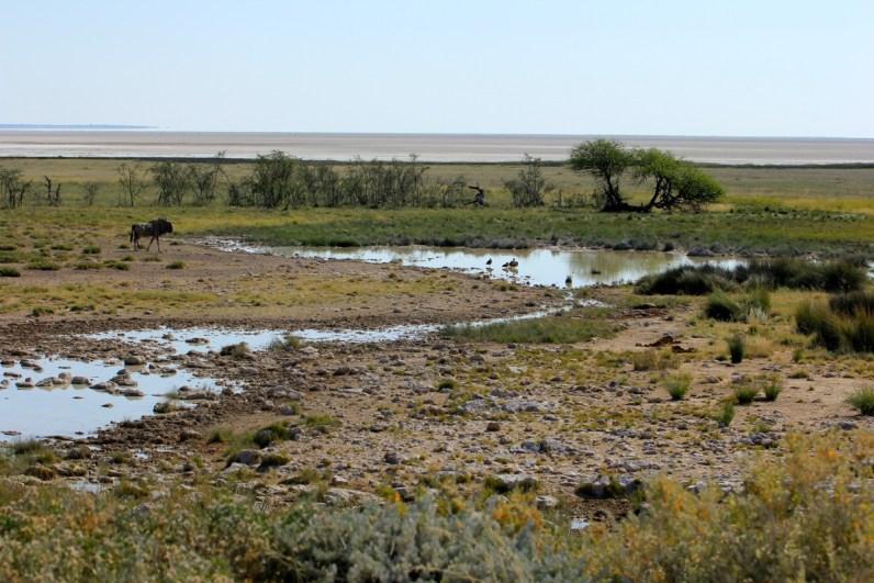 Het dorre droge landschap van Etosha National Park is ideaal voor het spotten van wild