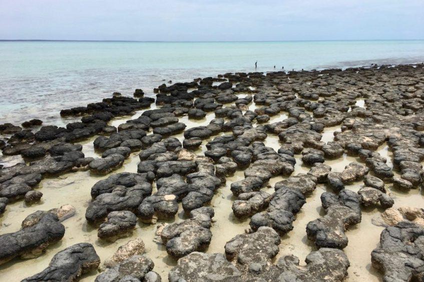 De stromatolieten van Hamelin Pool hoort op jouw route West-Australië