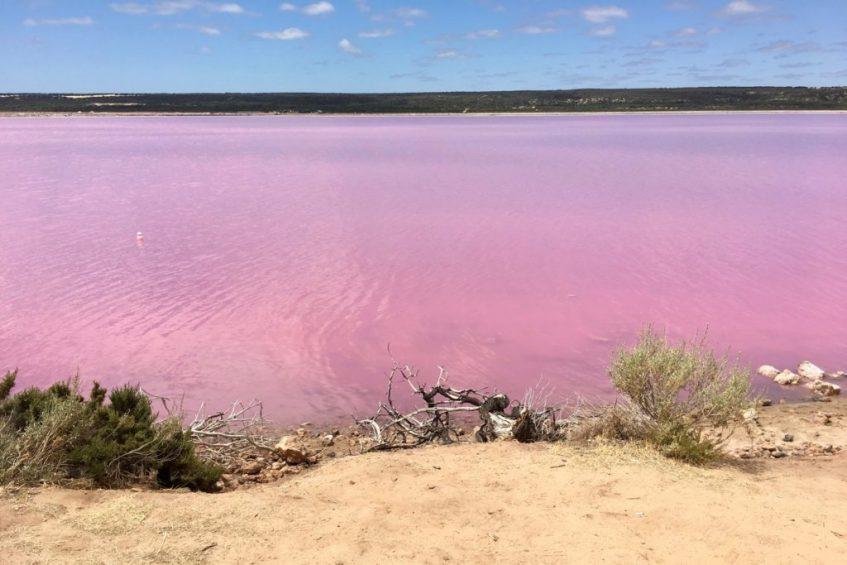 Bezoek het roze meer Hutt Lagoon (Pink Lake) tijdens je route West-Australië