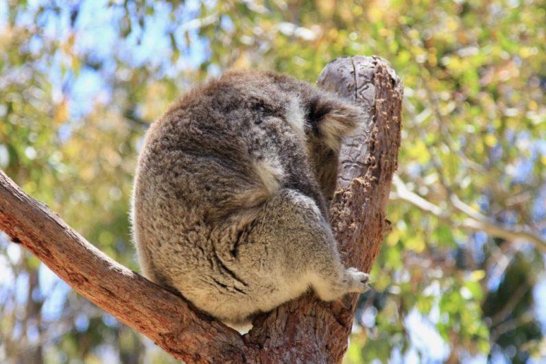 Heerlijk kamperen in Yanchep N.P. is een aanrader tijdens jouw route West-Australië