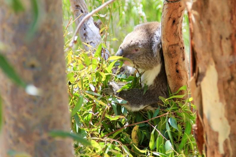 16x unieke Australische dieren die je gezien wilt hebben