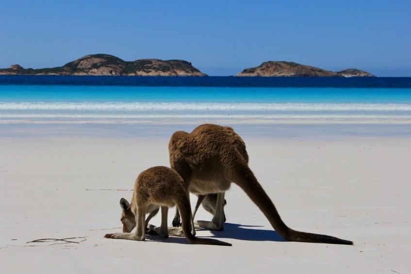 Redenen waarom je nooit op reis moet naar Australië