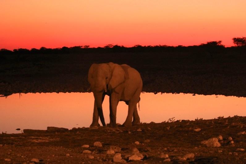 De waterpoels bij de campings in Etosha National Park zijn echt geweldig