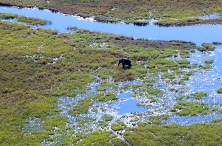 Waarom de Okavango Delta op je bucketlist moet