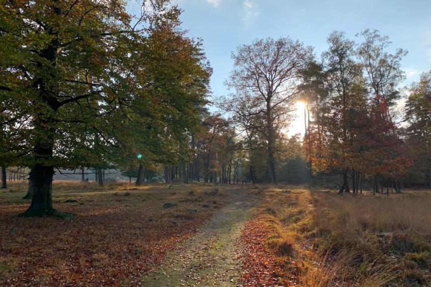 De mooiste wandelroutes rond Groningen stad: wandel op de Hondsrug in Drenthe