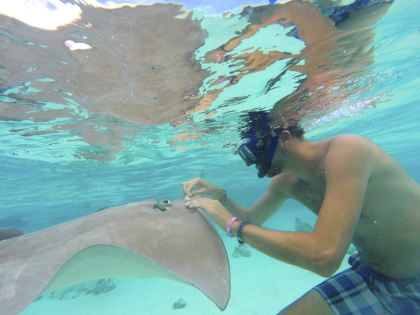 Marcel petting a stingray