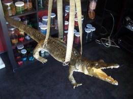 alligator_bag_20_200.sized