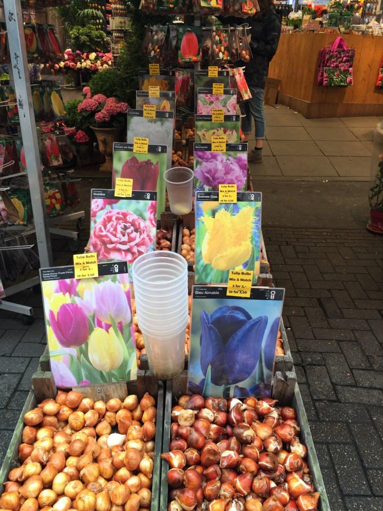 Amsterdam Bloemenmarkt Flower Market Flower Buds