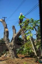 Mr. DAPs Railway Tree Removal-10