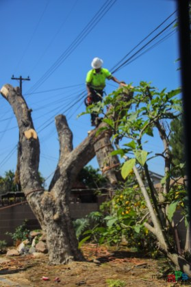 Mr. DAPs Railway Tree Removal-10