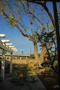 Mr. DAPs Railway Tree Removal-3