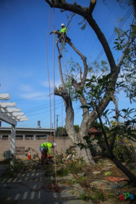 Mr. DAPs Railway Tree Removal-6