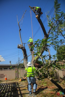 Mr. DAPs Railway Tree Removal-7