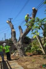 Mr. DAPs Railway Tree Removal-9