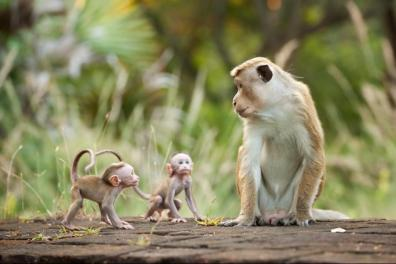 monkey kingdom