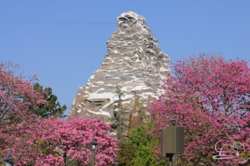 Springtime at Disneyland - February_21_2016-65