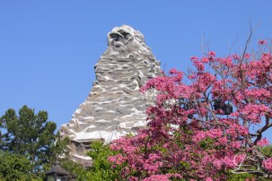 Springtime at Disneyland - February_21_2016-9