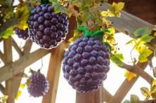 Boysenberry Vignette_1