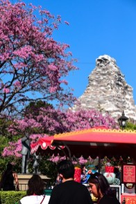 DisneylandSpringtime 1