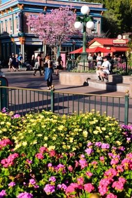 DisneylandSpringtime 10