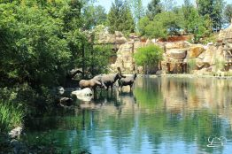 Disneyland_Updates_Sundays_With_DAPs-2