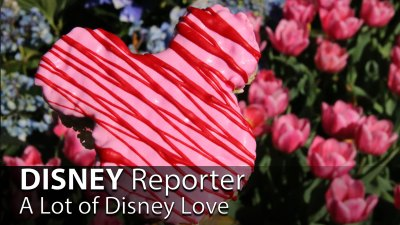 A Lot of Disney Love - DISNEY Reporter