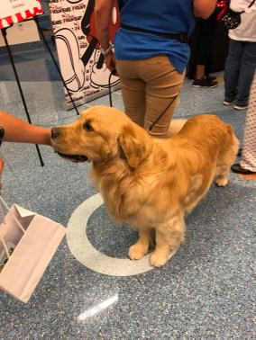 Dogs volunteer to visit children at the hospital
