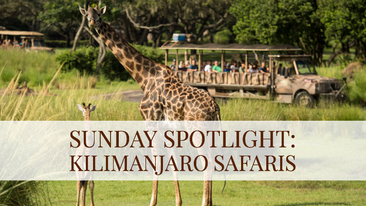 Sunday Spotlight: Kilimanjaro Safaris