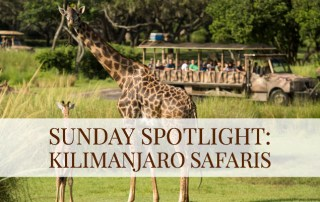 Sunday Spotlight: Kilimanjaro Safaris