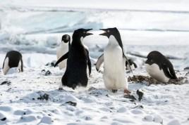 "Disneynature ""Penguins"""