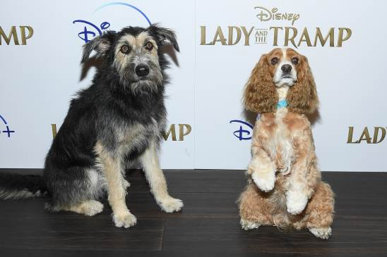 "NEW YORK, NEW YORK - OCTOBER 22: Monte and Rose attend as Cinema Society hosts a special screening of Disney+'s ""Lady And The Tramp"" at iPic Theater on October 22, 2019 in New York City. (Photo by Dimitrios Kambouris/Getty Images for Disney+)"