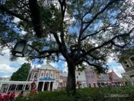 Liberty Tree in Liberty Square at Magic Kingdom-18