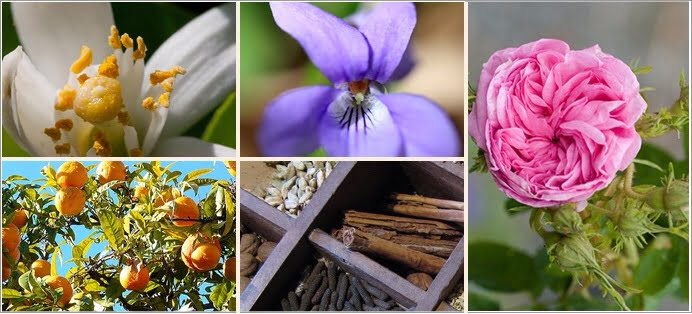 Les matières premières en parfumerie