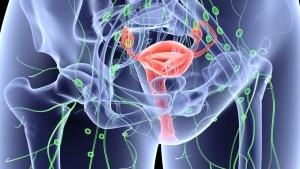 الورم الليفي وتأثيره على عملية الحقن المجهري