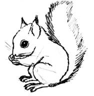 squirrel-drawing-004