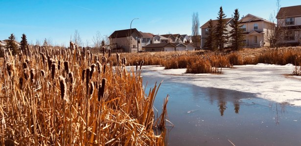 early spring at the pond