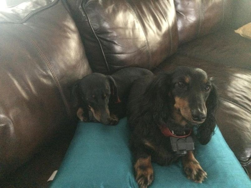 ...and two of my favorite dogs! (Suzy and Rocky)
