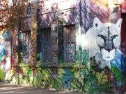 Wall Art Santiago: snow puma