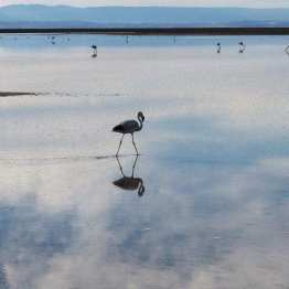 Reflections on the Reserva Los Flamingos