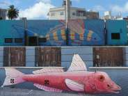 Two different but similar fish pictures. The top piece is situated along the Rambla, where you can find more street art! The bottom one is in a small street in central Montevideo.