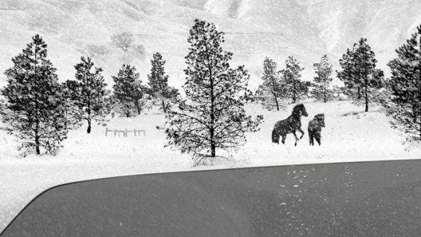 24 Frames Kiarostami