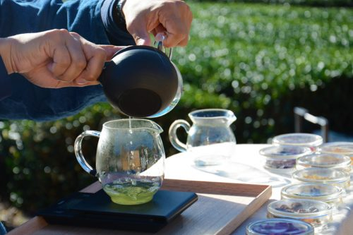 結局どう健康にいいの?忙しい朝に美味しく飲む方法は?意外と知らない「緑茶」のQ&A