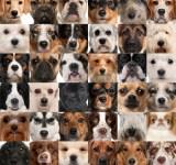最新・人気の犬種ランキング発表!ダントツ1位は、あのわんこ♡