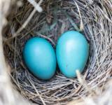 青い鳥症候群とは? 自己チェックに使える特徴と恋愛傾向