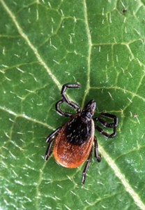 Lower Tick exposure with these tips