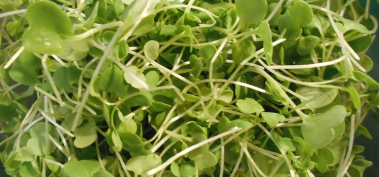 Microgreens ? It's Really Time for Spring Eats