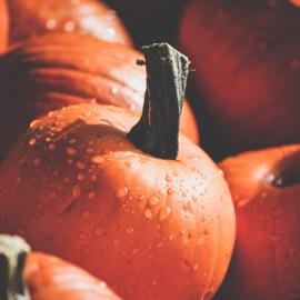 Whole Local Seasonal Food Try Pumpkin this Fall