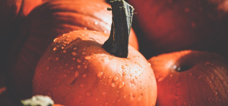 Whole Local Seasonal Food Try Pumpkin this Fall