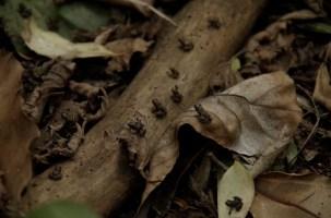 Tiny frogs.